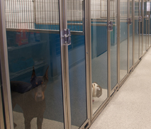 installation and flooring picture picture - Dog Kennel Design Ideas