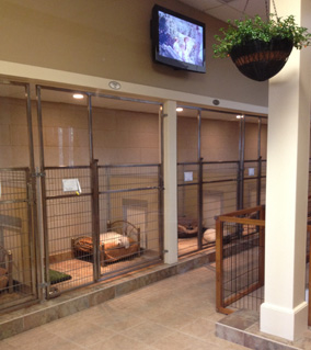 Mason company kennel manufacturer kennel designs for Dog grooming salon floor plans