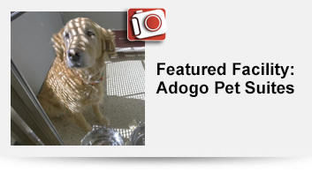 Adogo-Pet-Suites