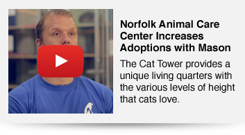 Increased Cat Adoptions at Animal Care Center