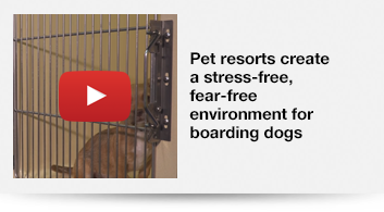 Pet resorts create a stress-free, fear-free environment for boarding dogs